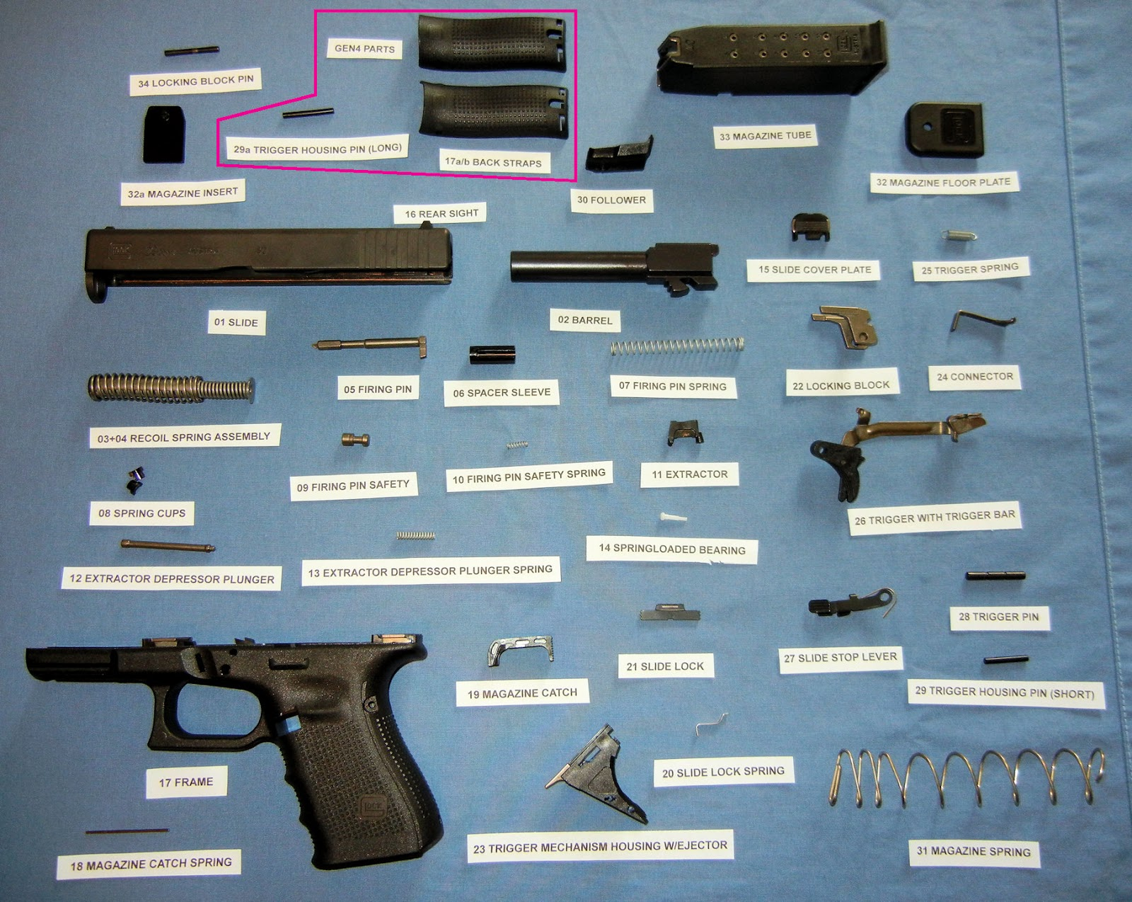 Glock pistol parts diagram color coded, showing frame pins, springs,  magazine assembly, and lubrication points.